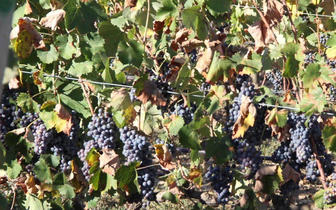 El Festival del Vi del Somontano serveix 70.600 vins i tapes