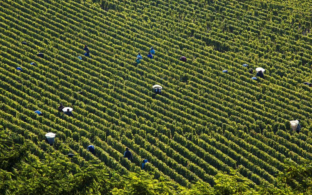 Burgundy celebrates good weather