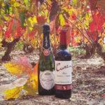 CVNE es bolca amb el vi sostenible i llança edicions ecològiques de Cune i de el cava Roger Goulart