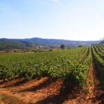 Celler Grapissó microvinificacions de muntanya al Penedès