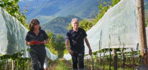Campgran 2020, primer vi de Cal Mandrat cupatge de riesling i gewürztraminer de la vinya de Montellà, a la Cerdanya