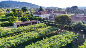 Blanco Granito 2019 del Pazo Torre Penelas, el primer vi fermentat i criat en granit gallec